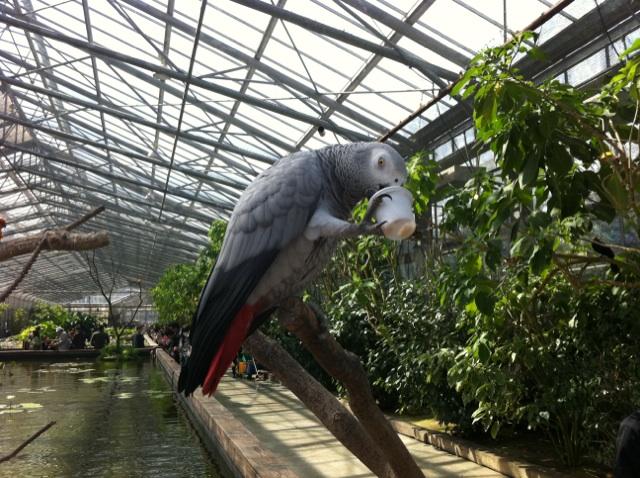 花鳥園で気になった鳥