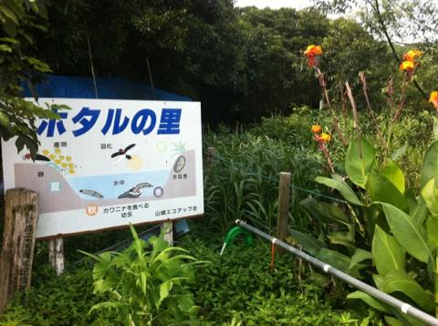 宮崎に帰って来ました。